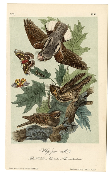 Group of 148 Lithographs from the Birds of America.