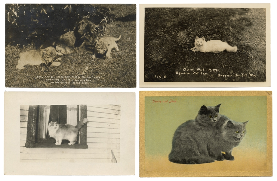 Collection of Over 200 Postcards of Domestic Cats, Mainly RPPCs.